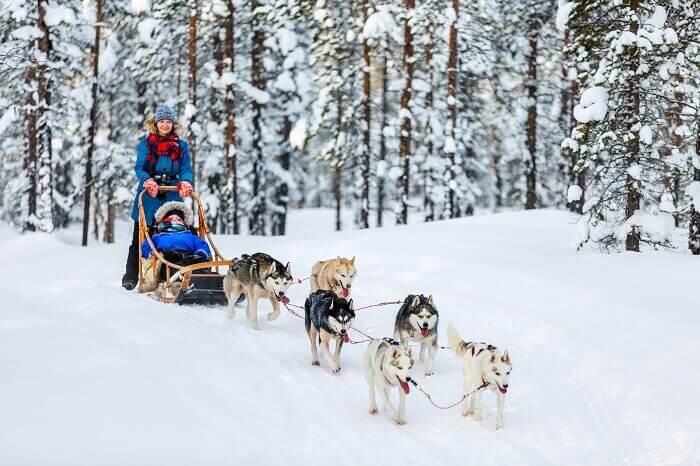 husky-finlande