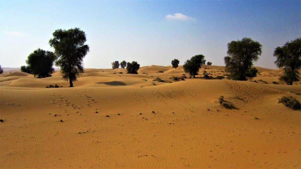 safari-desert-dubai
